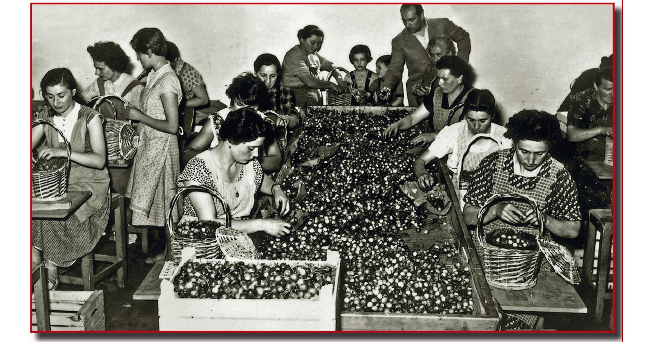Le cernitrici della frutta a Vignola negli anni '60