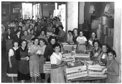 Gruppo di cernitrici della frutta a Vignola negli anni '60